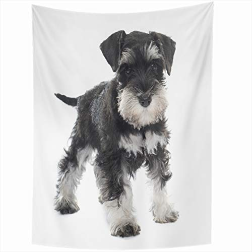 AlliuCoo Wall Tapestries 50 x 60 Inches Black Puppy Miniature Schnauzer Front White Dog Pet Home Decor Wall Hanging Tapestry Living Room Dorm