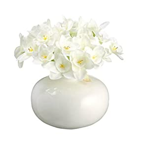"Narcissus in White Ceramic Vase 5"" 66"