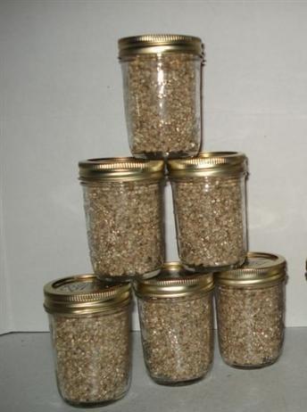 (Brown Rice Flour&vermiculite Mushroom Substrate 6 Jars (1/2 Pint Jar) Growing Kit)
