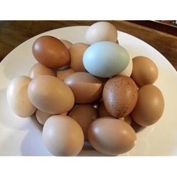 Amazon com : Fertile Hatching Eggs : Everything Else