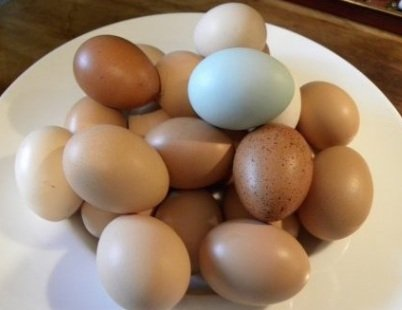 (Fertile Hatching Eggs)