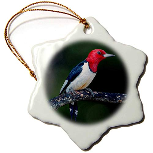 3dRose Stamp City - Birds - A red-Headed Woodpecker on The Branch of a Tree Posing for The Camera. - 3 inch Snowflake Porcelain Ornament (ORN_290777_1)