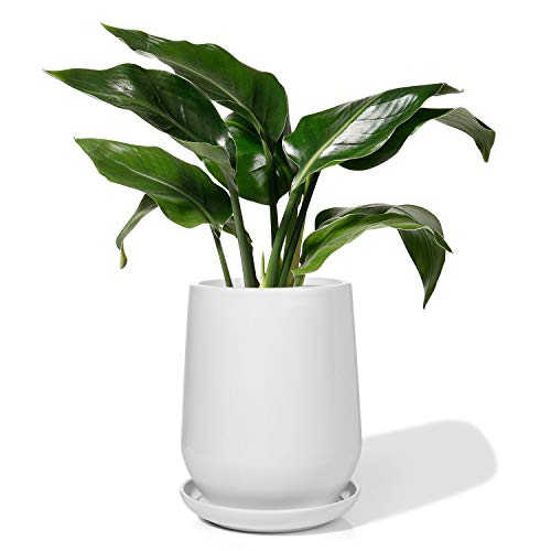Potey Ceramic Plant Pot Planter - 5.3 Inch White Planters for Indoor Plants Flower Monstera with Drainage Hole Saucer
