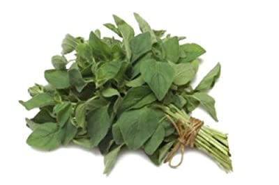Organic Greek Oregano 750 Seeds Imported Heirloom Herb Varietal 50mg