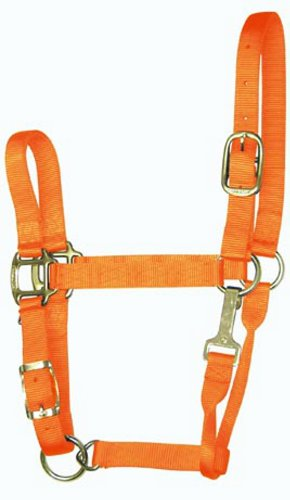 (Hamilton 5-8 1-Inch Adjustable Quality Horse Halter with Small Snap for Horses 500 to 800-Pound, Mango Orange)