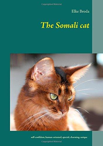 The Somali cat