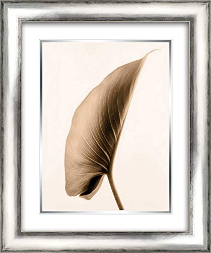 Alocasia 1 20x24 Silver Contemporary Wood Framed and Double Matted Art Print by Greenwood, Julie