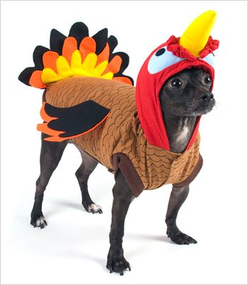 Turkey Costume for Dogs - Size 4 (12.5