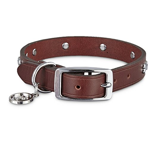 (Bond & Co. Brown Leather Bone Stud Dog Collar, for Neck Sizes 12-15, Small )