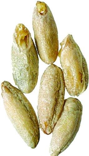 Rye Malt - Malt - Rye - 5 lb