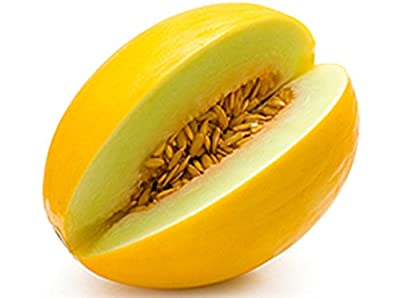 Rare Seeds Sweet Yellow Honey Melon Lesya Best Organic Russian Heirloom Seed
