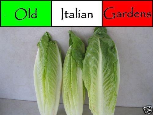 500 Parris Island Romaine Lettuce Seeds Easy to Grow Heirloom Tasty Ceaser Salad