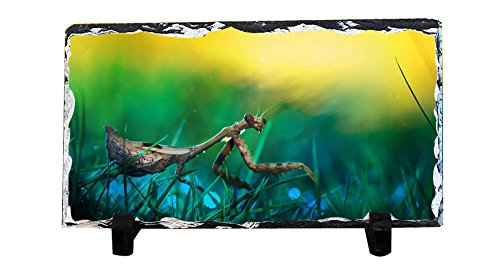 DKLZY Black Friday Promotions Personalized Square Shape Rock Slate Stone painting and Custom Praying Mantis rock painting DIY Photo Plaque Nice Family Memory Keepsake ()
