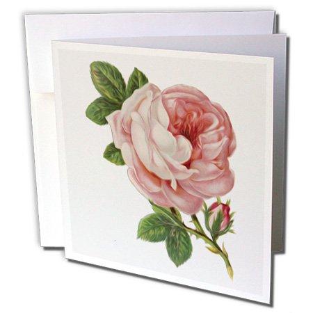 (3dRose Vintage Pink Rose Floral Vignette Greeting Cards, 6