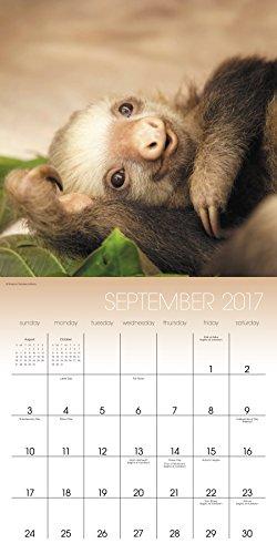 Sloths Wall Calendar (2017) -