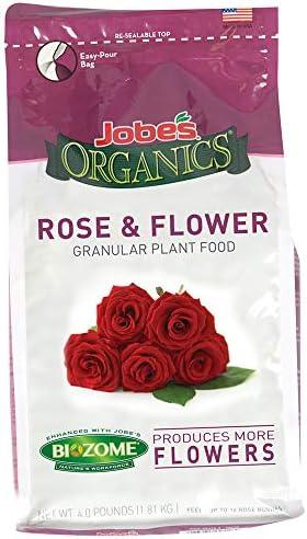 Rose planta _image3