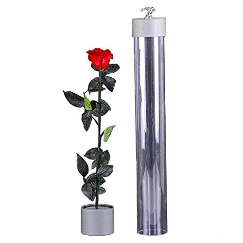 AmazoPro Forever Rose Romantic Gifts for Her | Real Fresh Preserved Rose | Preserved Flowers - Premium Love Gifts for Girlfriend for Couple | Full Long Stem Roses in Premium Gift Box | Red