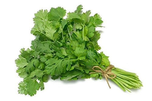 National Gardens Coriander or Cilantro Herb Seeds (Multicolour,...