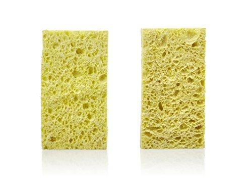 Best Sponges