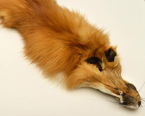 Beautiful Tanned Red Fox pelts, Furs (rdfxsemi)