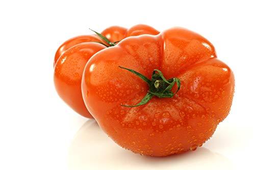 Beefmaster Hybrid - Tomato Seeds, -