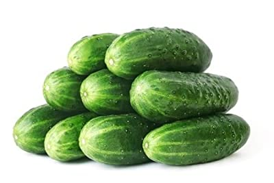 50 Straight Eight Cucumber Seeds Cucumis Sativus by RDR Seeds