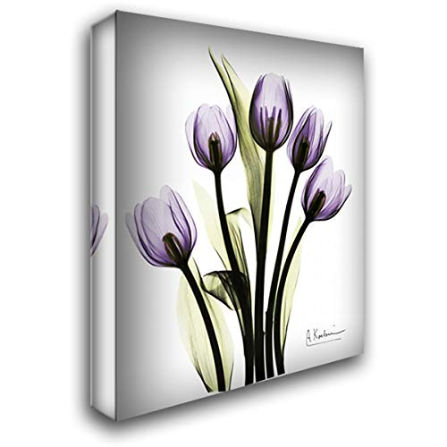 (Regal Tulip B13 28x36 Gallery Wrapped Stretched Canvas Art by Koetsier, Albert)