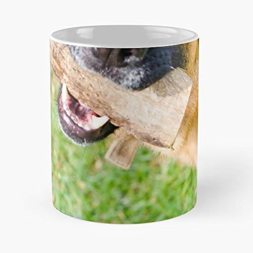 Dog Park Fetch Animal - Funny Coffee Mug, Gag Gift Poop Fun Mugs