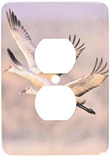 Cranes Cover - 3dRose lsp_92944_6 Sandhill Crane Bird, Bosque Del Apache New Mexico Us32 Rnu0005 Rolf Nussbaumer 2 Plug Outlet Cover