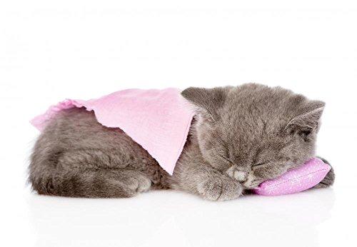 Wallmonkeys Cute Baby Kitten Sleeping Wall Decal Peel and Stick Animal Graphics (30 in W x 21 in H) WM184438