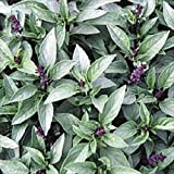 Basil Thai Great Garden Herb by Seed Kingdom 200 Seeds