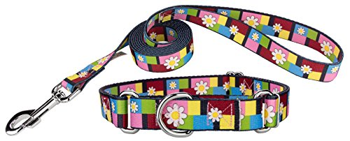 Country Brook Design | Spring Daisies Martingale Dog Collar & Leash - Small (Collar Daisy Block)