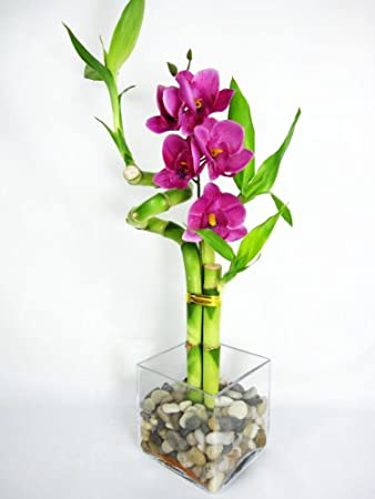 9GreenBox   Lucky Bamboo   Spiral Style With Silk Flowers And Glass Vase  With Pebbles