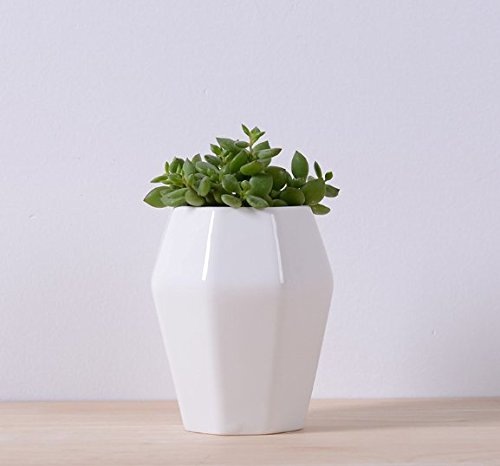 office planter. perfect planterflower pot for succulent cacti flowers live or artificial plants home office pla004721 planter s