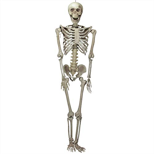 Northlight 6.5' Life-Size Jointed Skeleton Hanging Halloween Prop Decoration