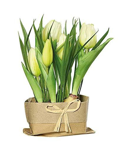 Kunst Pflanze Tulpe Gelb Kunstblume Kunsttulpe künstliche Pflanze täuschend echt