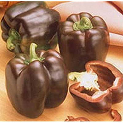 Chocolate Beauty Bell Pepper Seeds (20 Seed Pack) : Garden & Outdoor
