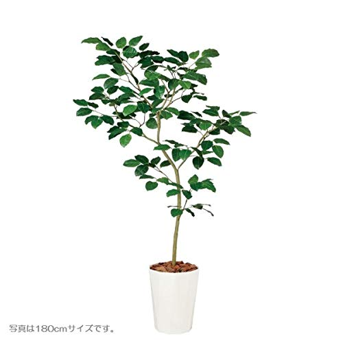 人工観葉植物 ベンガルボダイジュFST150 高さ150cm dt99116 (代引き不可) インテリアグリーン 造花 B07SRGY433