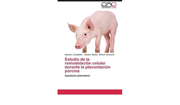 Estudio de la remodelación celular durante la placentación ...