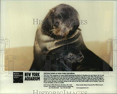Press Photo Northern Fur Seal pup & mother at New York Aquarium, Coney Island