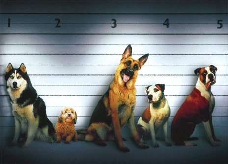 Dog Line Up Funny German Shepherd, Boxer & Husky Birthday Card (Boxer Dog Greeting Cards)