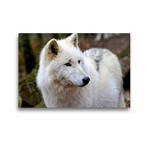 CALVENDO Toile de qualité supérieure 45 cm x 30 cm Quer Le Loup Polarwolf   Tableau sur châssis   Tableau sur Toile sur châssis   Impression sur Toile   Animaux de