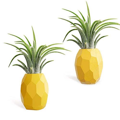 AIEVE Air Plant Holder,2 Pack Air Plant Pineapple Planter Tillandsia Holder Hanger Geometric Air Plant Holder Container Pot Display with...