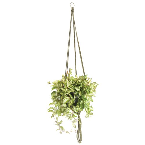 - Wildwood MK-42OG 3 Leg Macrame Plant Holders, Olive Green, 42-Inch