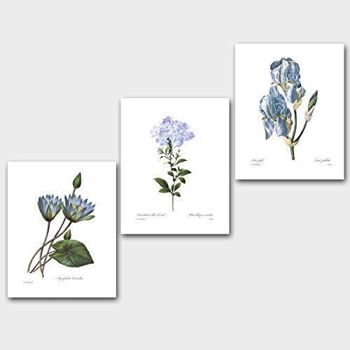 Set of 3 Botanical Prints, Blue Wall Art (Redoute Flower Decor) Lotus Cape Plumbago Iris --