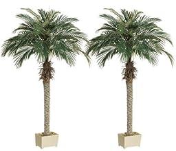 6\' Phoenix Palm Tree in Rectangular Plastic Pot (Pack of 2)