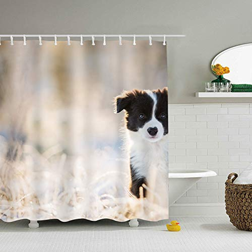 nicell11 Border Collie Shower Curtain - Water, Soap, and Mildew Resistant - Shower Hooks are Included (Anpassen Oder Anpassen)