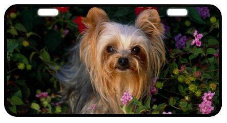 "Yorkshire Terrier Yorkie Dog Novelty License Plate Decorative Front Plate 6.1"" X 11.8"""
