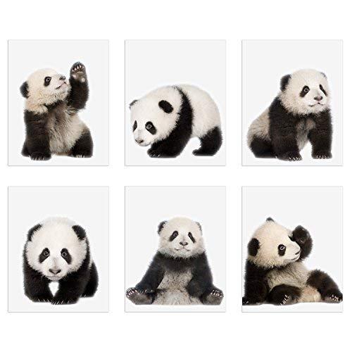 panda pictures - 1