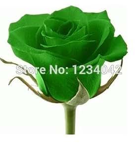 200 semillas de Rose Flores semillas verdes de belleza bulbos de flor elegante natural plantas bonsai Rose